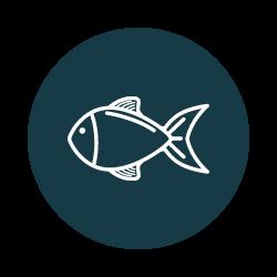 stockage logistique poisson stockage frigorifique
